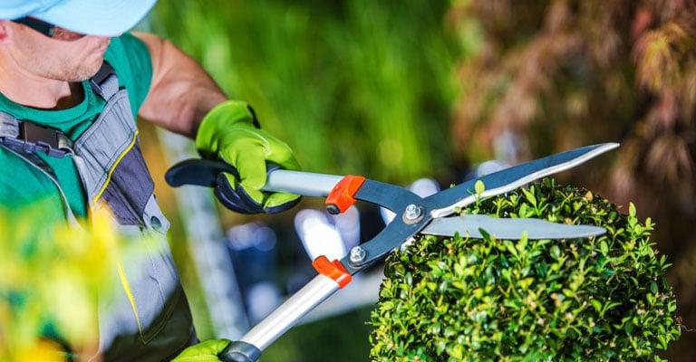 Manutenzione aree verdi e parchi